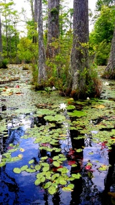 Cypress Gardens Swamp Tour