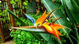 Cypress Gardens Flower